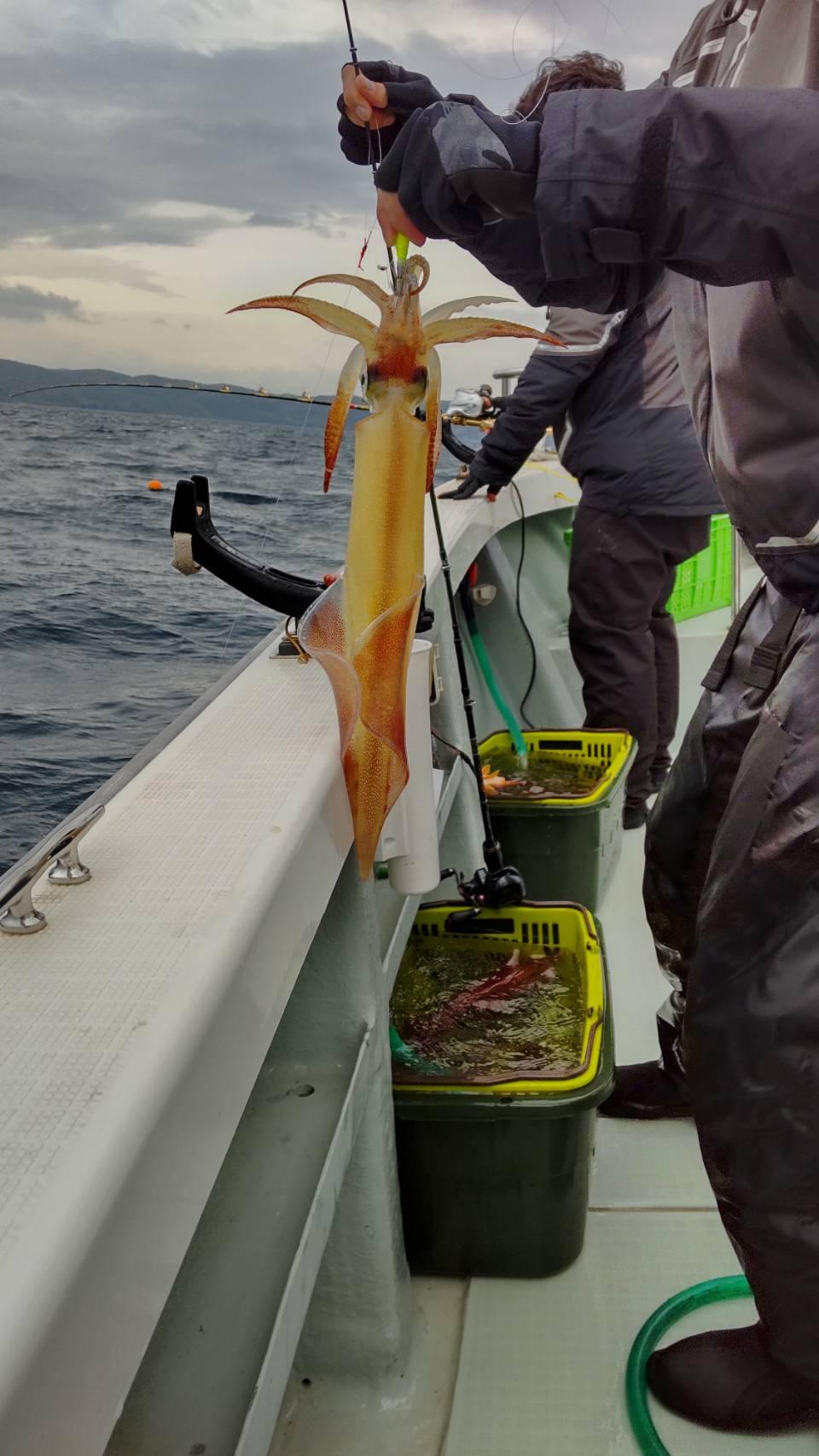 5月15日(土曜日)中潮 昼イカ釣り釣果